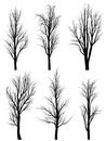 Silhouettes of birch trees without leaves. Stock Image