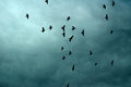Silhouettes of birds in cloudy blue sky many flight over dark Stock Photo