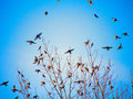 Silhouettes of birds flying on blue sky background black Royalty Free Stock Photography