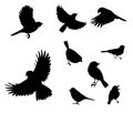Silhouettes of birds Royalty Free Stock Photo