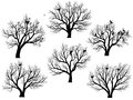 Silhouettes of birds nest in trees without leaves set vector deciduous large during the winter or spring period Stock Images
