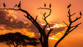 Silhouettes of birds on sunset sitting dead tree Stock Photos