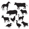 Silhouettes of domestic animals vector image Royalty Free Stock Images