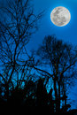 Silhouettes of dry tree against sky and beautiful full moon. Out Royalty Free Stock Photo