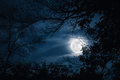 Silhouettes of dry tree against sky and beautiful super moon. Ou