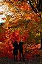 Silhouettes in Fall Royalty Free Stock Photo