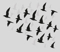 Silhouettes of flying birds Royalty Free Stock Photo