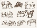 Silhouettes of horses set vector sketches Stock Images