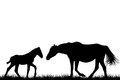 Silhouettes of mare and her foal Royalty Free Stock Photo