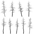 Silhouettes of old trees without leaves (deadwood). Royalty Free Stock Photography