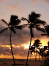 Silhouettes of palm trees on a tropical beach at sunrise Royalty Free Stock Photography