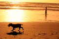 Silhouettes of running dog and a man on the beach Stock Photo