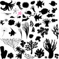 Silhouettes of sea animal Royalty Free Stock Photo