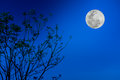 Silhouettes of tree against blue sky and beautiful full moon. Outdoor. Royalty Free Stock Photo
