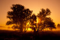 Silhouettes of trees in orange sunrise backlit . Royalty Free Stock Images