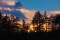 Silhouettes of trees on sunset over sky Stock Photo
