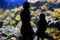 Silhouettes of visitors in aquarium an Stock Photos