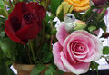 Silk cocoon bird on blooming pink rose little Stock Photos