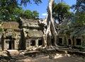 Strom spotřebovává starobylý z, Kambodža
