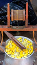 Silk production process making of the cocoon silkworm from egg to worm Stock Image