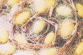 Silk Worm Cocoons In Nests Royalty Free Stock Photo
