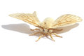 Silkmoth butterfly of on a white background Royalty Free Stock Image