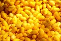Silkworm cocoon a pile of yellow yellow in detail Stock Image