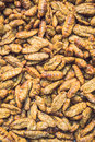 Silkworm pupae pattern for background used Royalty Free Stock Photo