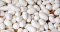Silkworms cocoons close up of Royalty Free Stock Photo