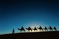 Sillhouette of camel caravan going through the desert at sunset Royalty Free Stock Images