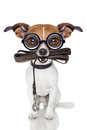 Silly crayz dog Royalty Free Stock Photo
