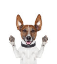 Silly crazy paws up dog Royalty Free Stock Photo