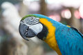 Silly Macaw Royalty Free Stock Photo