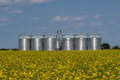 Silos in Canola Field Royalty Free Stock Photo