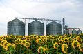 Silos in a sunflower field Royalty Free Stock Photo