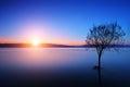 Silueta de un árbol en el lago ohrid macedonia en la puesta del sol Imagenes de archivo