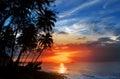 Siluetta delle palme e un tramonto sopra il mare Fotografia Stock