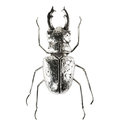 Silver bug figure Royalty Free Stock Photo