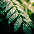 Silver drops on the leaves after the rain Royalty Free Stock Photo