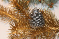 Silver pine cone Royalty Free Stock Photo