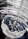 Silver spider Стоковое Изображение RF