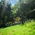 Striebro pavúk v slnečný na
