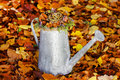 Silver watering can with autumn flowers and plants inside Stock Photo
