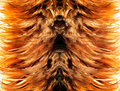 simetry brown fur from feather Royalty Free Stock Photo