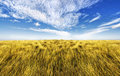 Simple high grass horizon Royalty Free Stock Photos