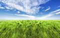Simple high grass horizon Stock Image
