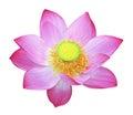 Simply lotus nelumbo nucifera indian sacred bean of india isolated on white background Stock Photo