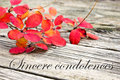 Sincere condolences condolence with twig with red leaves Royalty Free Stock Image