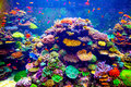 Singapore aquarium coral reef and tropical fish in sunlight Royalty Free Stock Photography