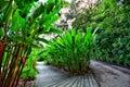 Singapore botanic gardens marina bay singapore a photograph taken inside at Royalty Free Stock Images